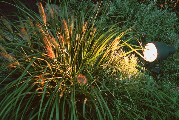 Licht_im_Garten1_gross